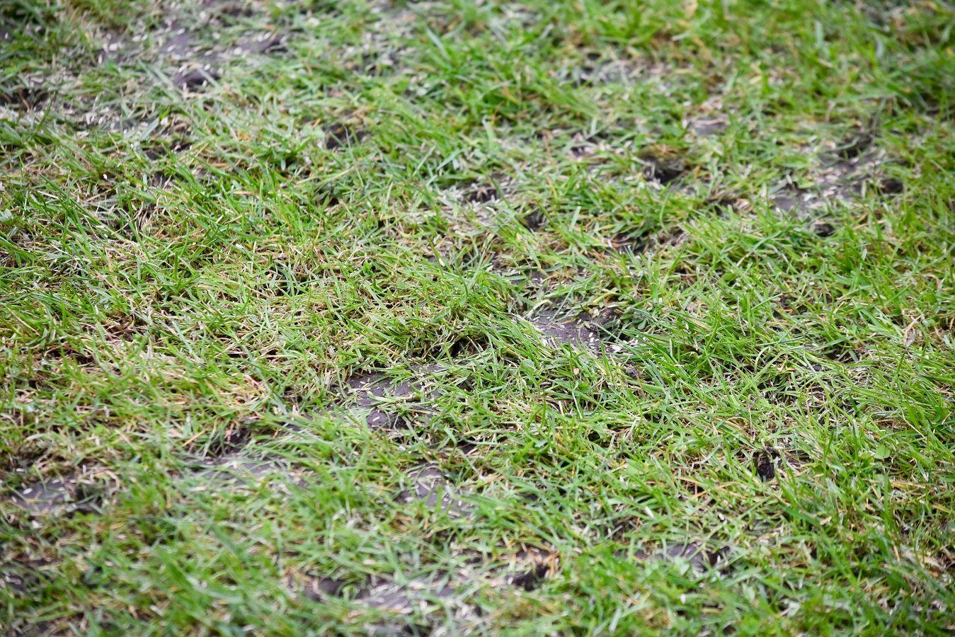 Das Aerifizieren ist eine Technik im Gartenbau zur Belüftung des Bodens einer Rasenfläche.